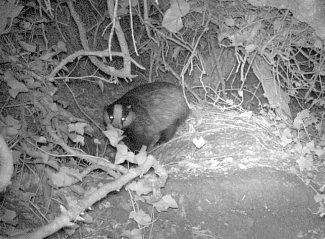 badger-cam2_2016-12-05-at-15-42-42
