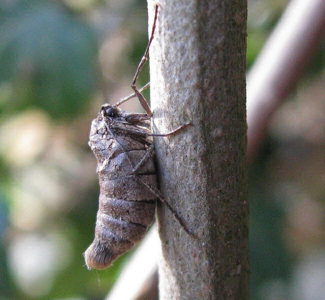 1663 March Moth_4