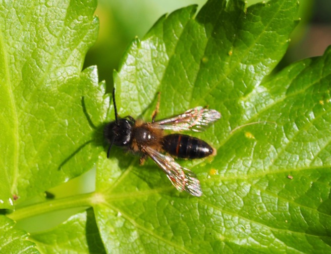 Trimmers mining bee