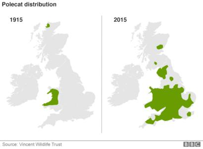 _87958028_polcats_distribution_624