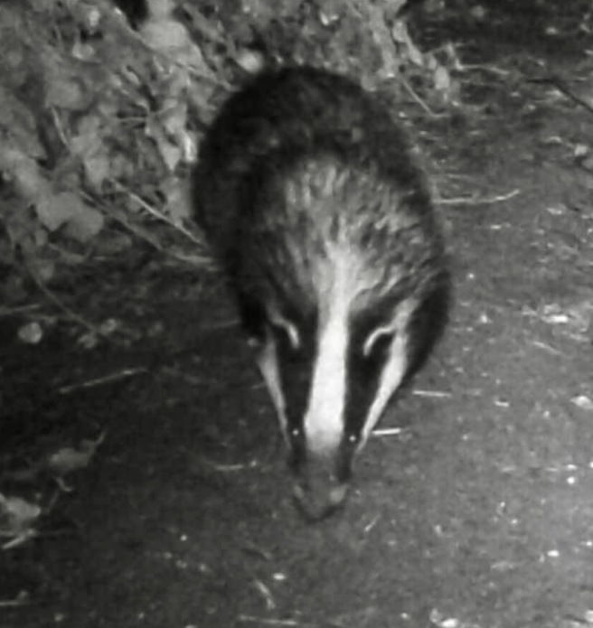 Screenshot 2020-07-09 at 17.43.48