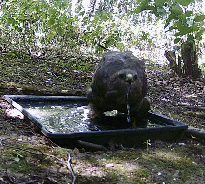 Trail camera